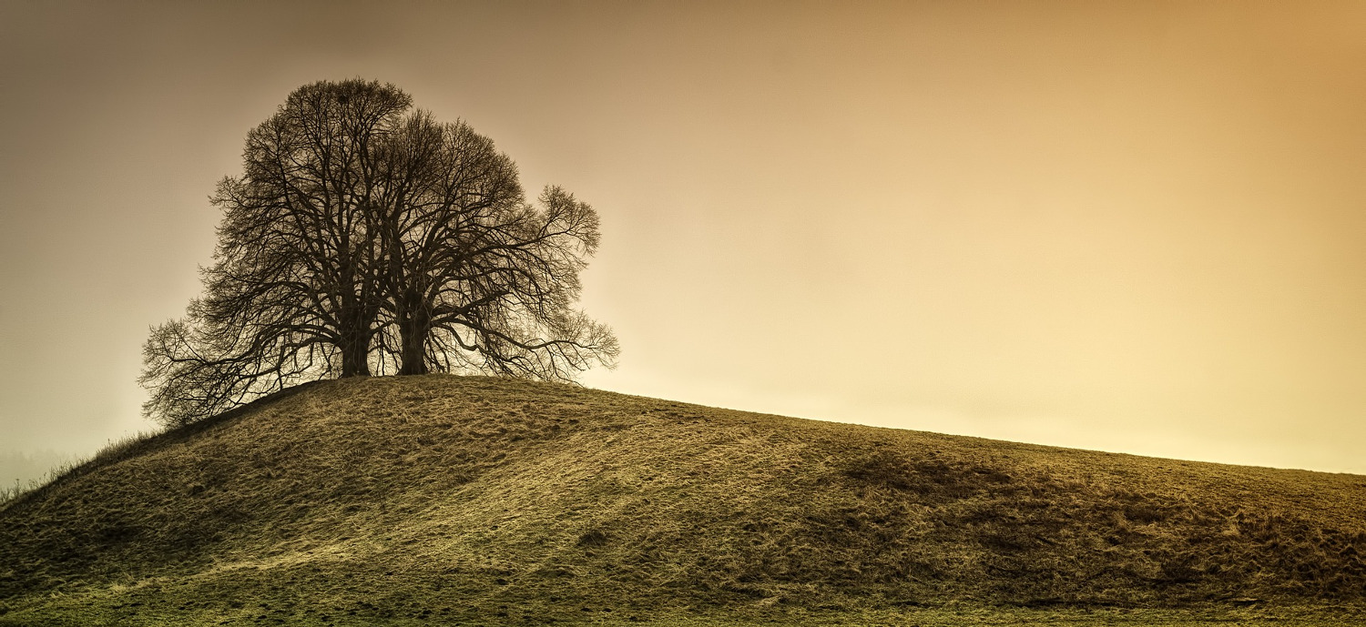 Lone Tree on a Hill